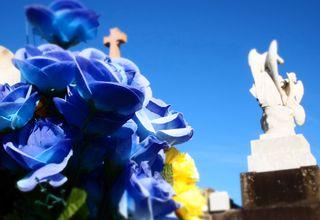 Blue roses + angel
