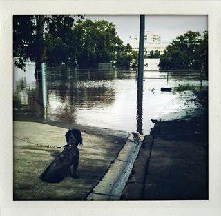 Bris flooding