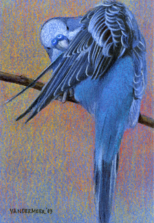Blue Chicken_2004