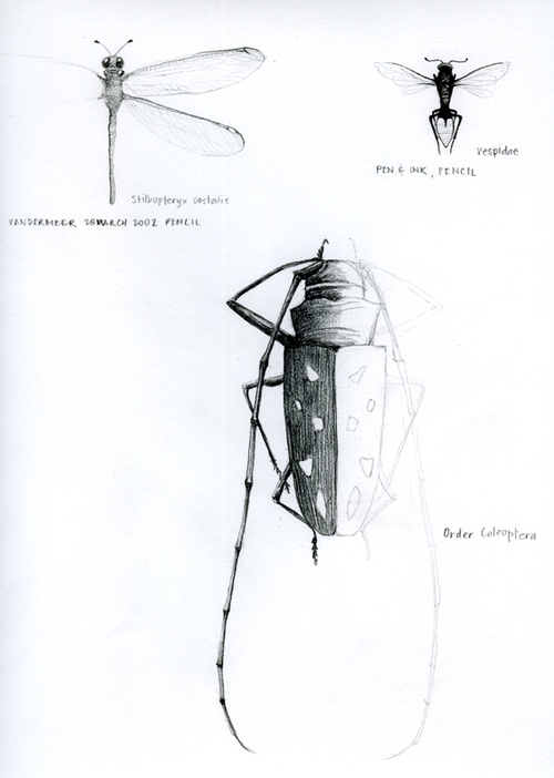Insects_2002