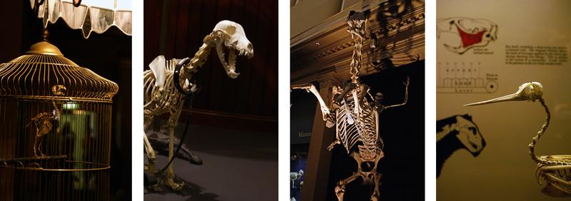 Skeletonroom